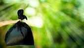 istock human hand showing garbage bag 656153264
