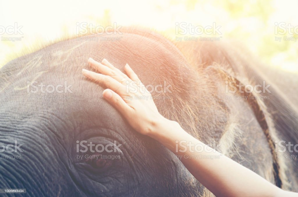 Human hand touching a crying Elephant body