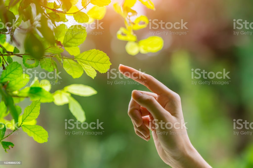 human hand touching pointing finger to nature green leaf nature ecology stock photo