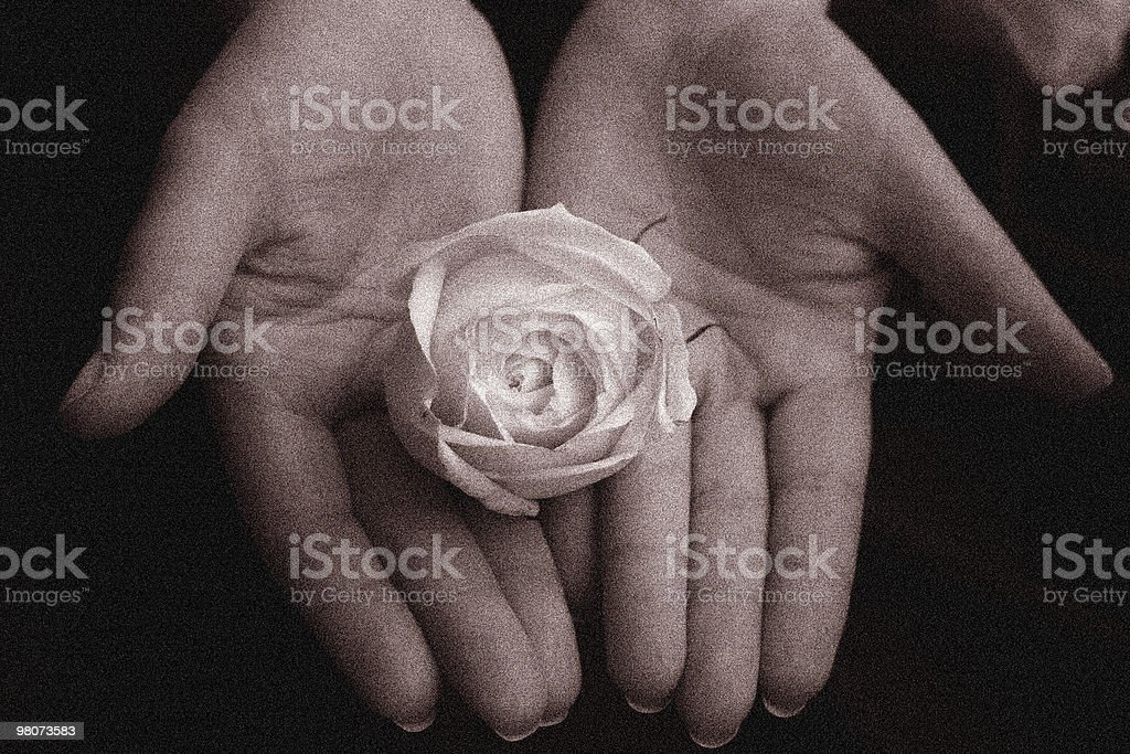 Human Hand Whith Flower royalty-free stock photo