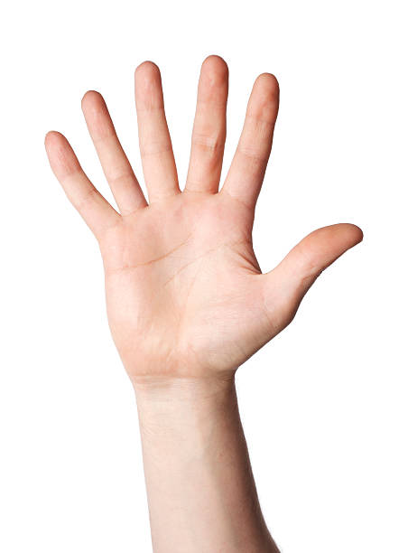 human hand with six fingers in a white background - number 6 stock photos and pictures