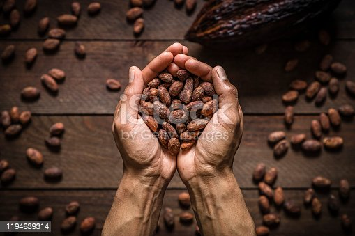 Top view of two human hands holding a cocoa beans heap. Behind the hands are more defocused cocoa beans and a cocoa pod on the background. Low key DSLR photo taken with Canon EOS 6D Mark II and Canon EF 24-105 mm f/4L