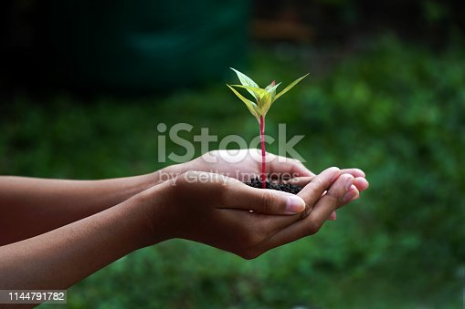 Human Hands Holding Green Plant With Soil Over Nature Background