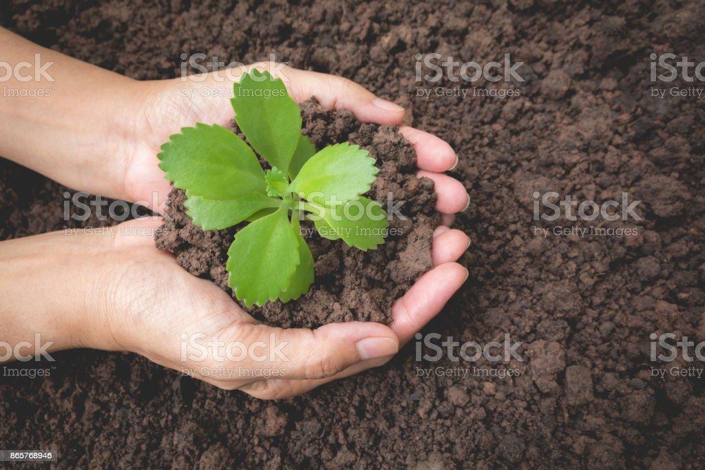 Menschliche Hände halten kleine Grünpflanze Lebenskonzept. Ökologie-Konzept. – Foto