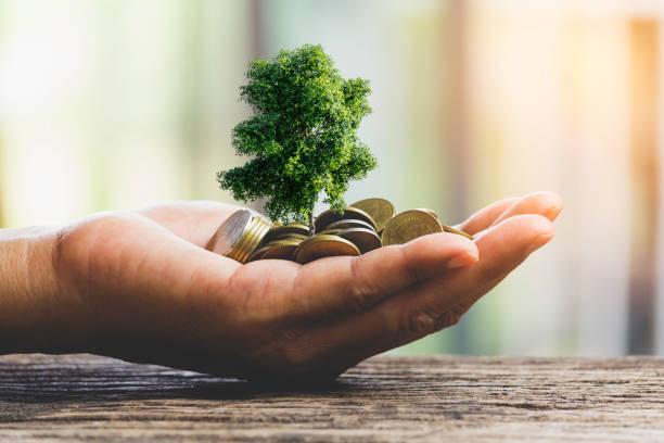 Menschliche Hände halten grüne kleine Pflanze mit Münzen für die Wirtschaft und Ökologie Konzept. – Foto