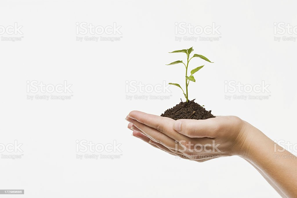 Human hands holding plant royalty-free stock photo