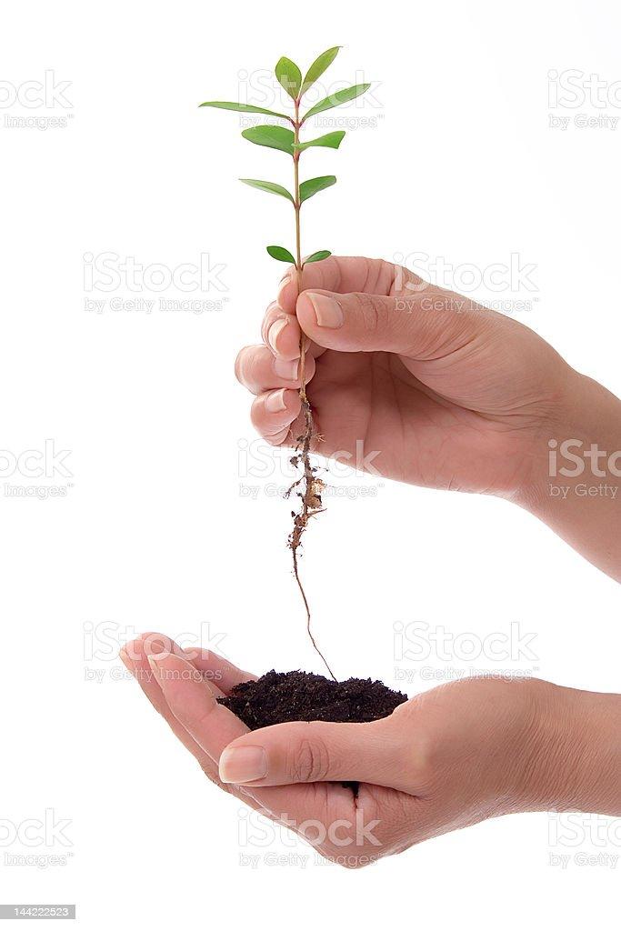 Mãos humanas com planta - fotografia de stock