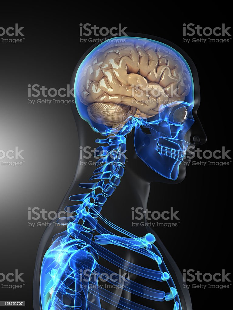 Human head scan with visible brain stock photo