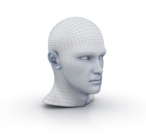 Royalty Free Wire Frame Human Face Human Head Computer Graphic ...