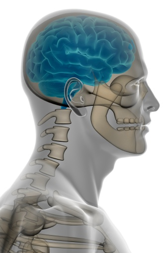 X-ray of a human head, with brain inside and bones, side view, on white background, great to be used in medicine works and health.