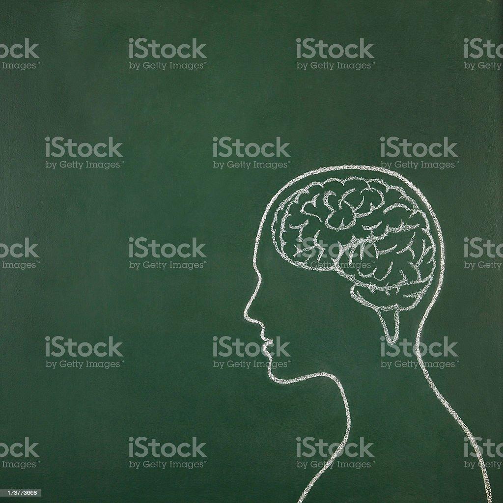 Human head with brain stock photo