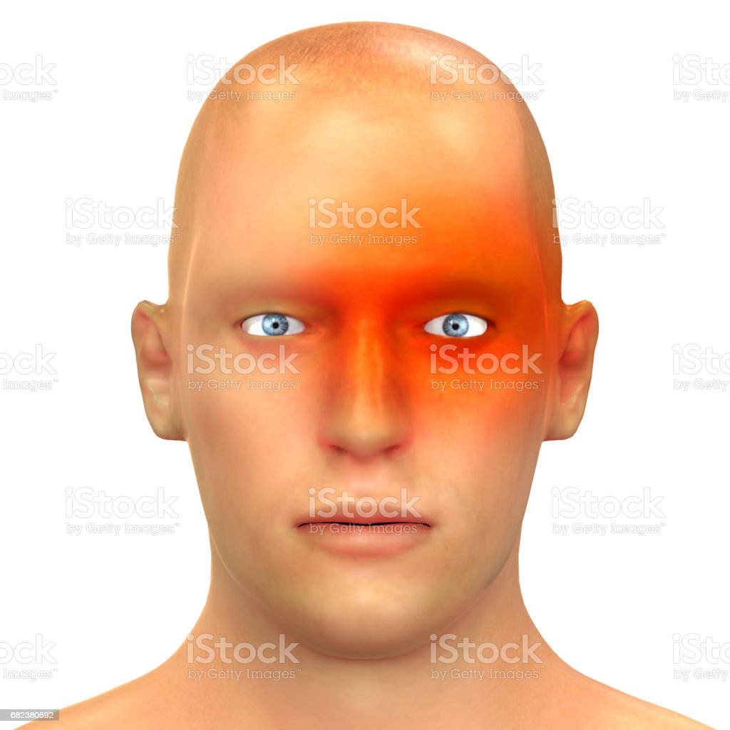 Human Headeche Types of Anatomy (Cluster) stock photo