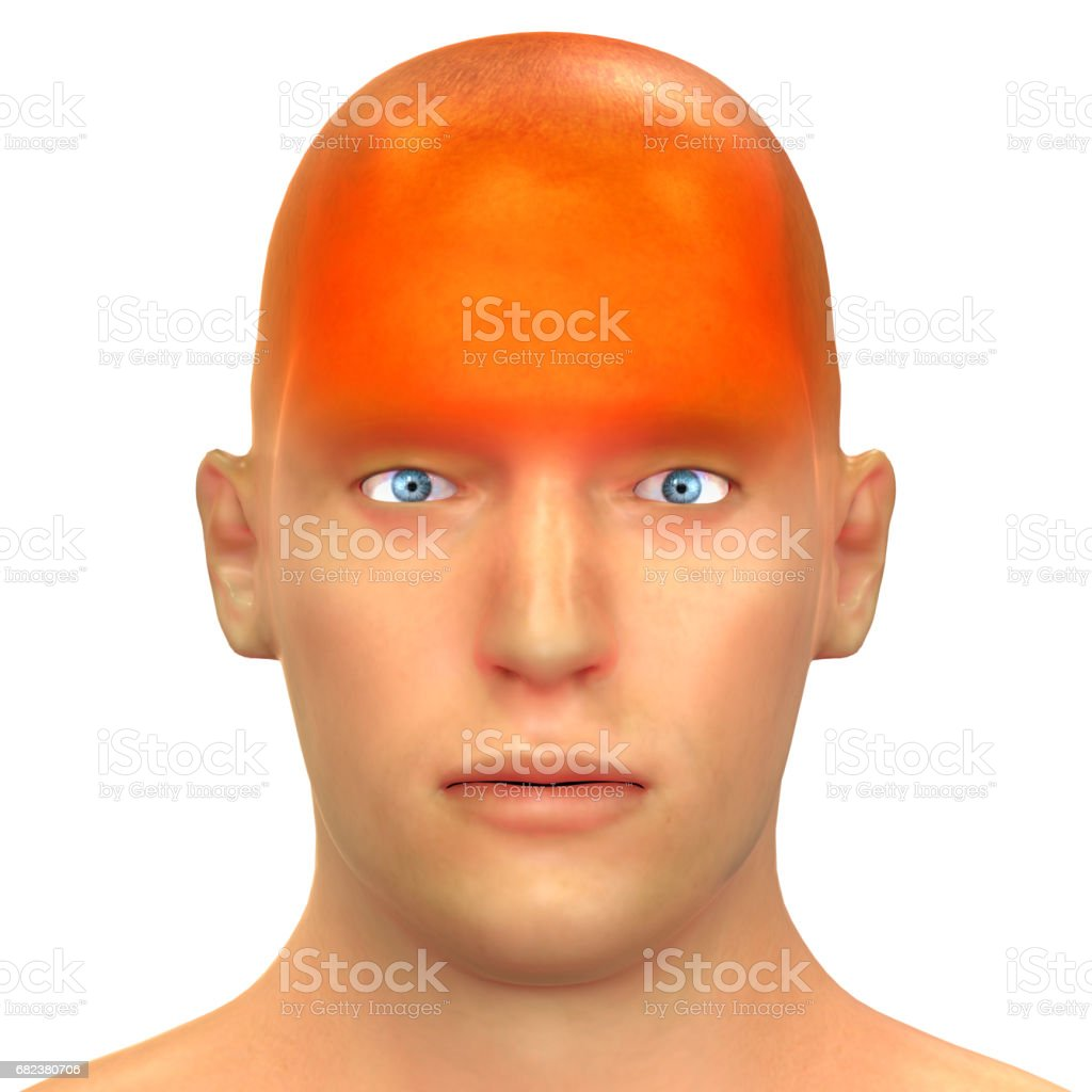 Human Headeche Types Of Anatomy Stock Photo & More Pictures of ...