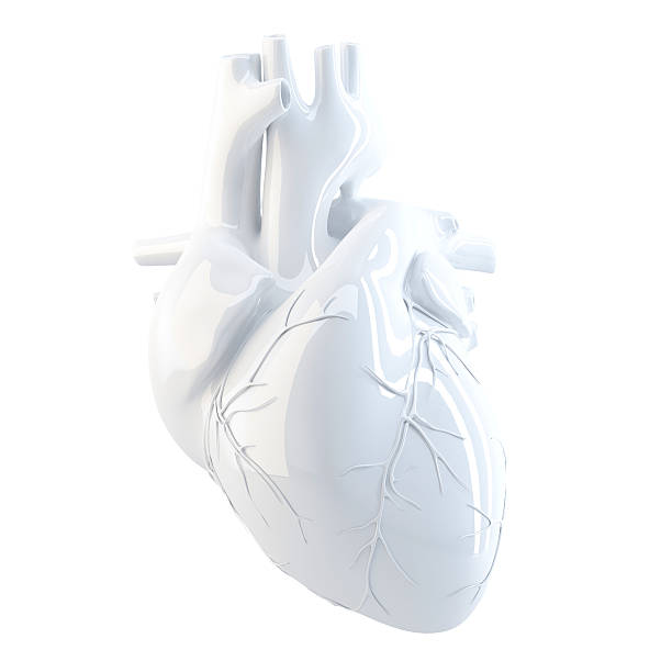 human heart. 3d render. isolated, contains clipping path. - human heart stock photos and pictures