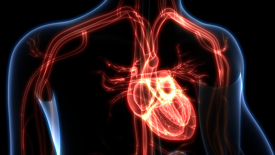 istock Human Heart Anatomy 1082275998