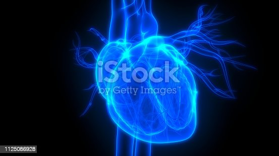 istock Human Heart Anatomy 1125086928
