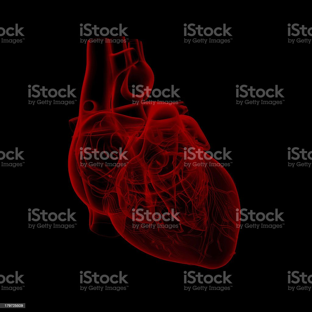 human heart - anatomy stock photo