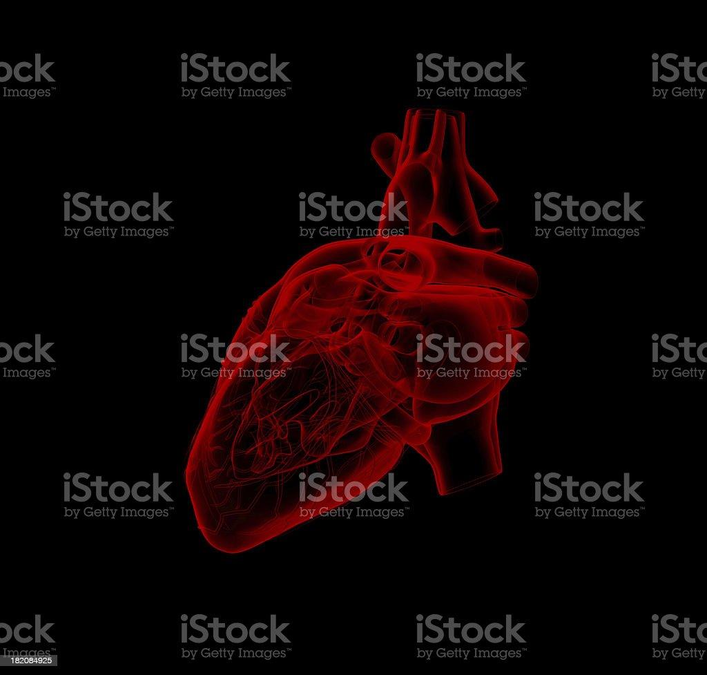 human heart - anatomy stock photo