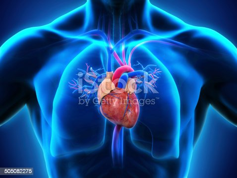 istock Human Heart Anatomy 505082275