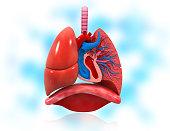 istock Human heart and respiratory system anatomy 1273823527