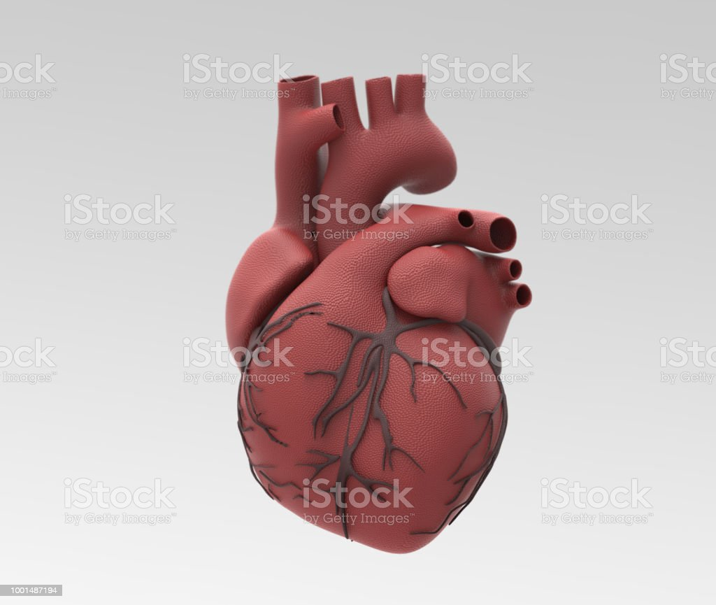 Human Heart And Vein In Rubber Material Illustration Stock Photo