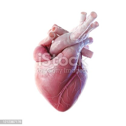3D front view render of the human heart
