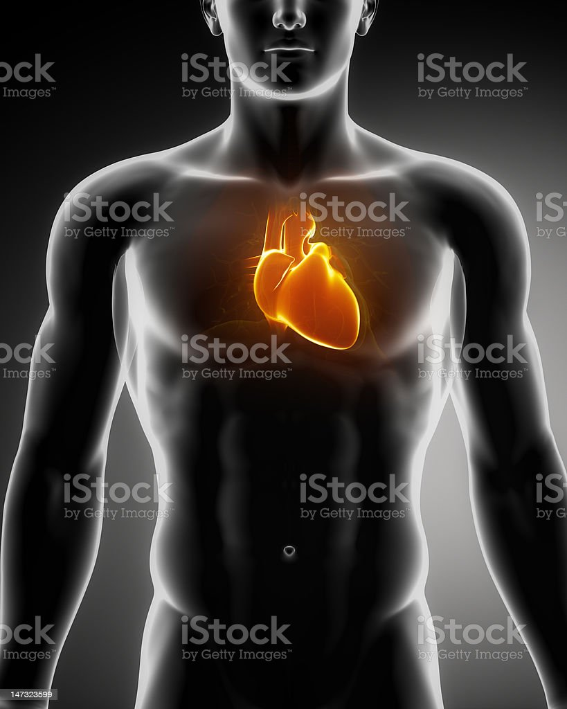 Human heart glowing in chest stock photo