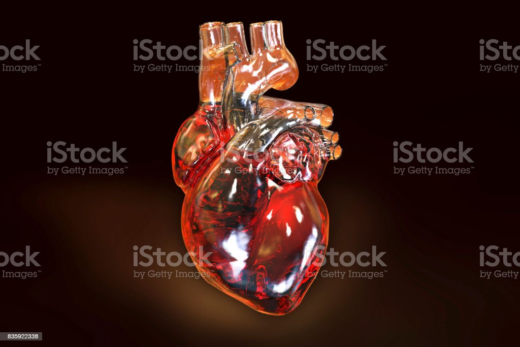 Human heart on dark background stock photo