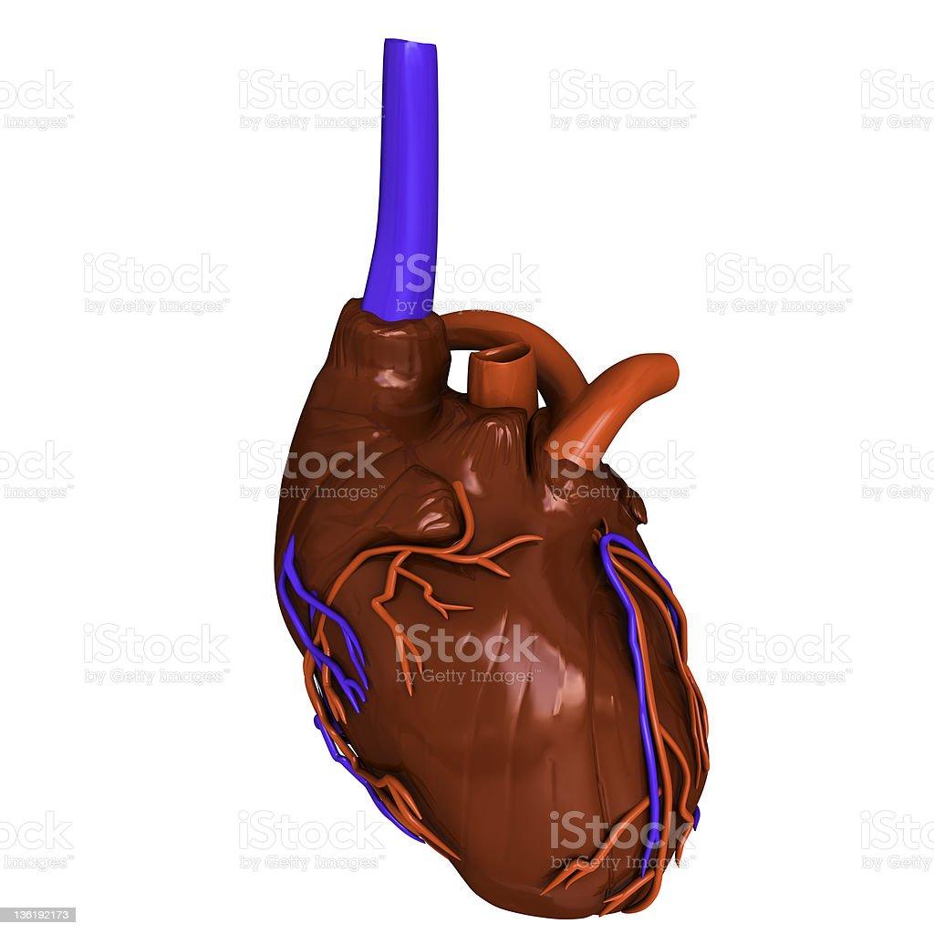 Human heart stock photo