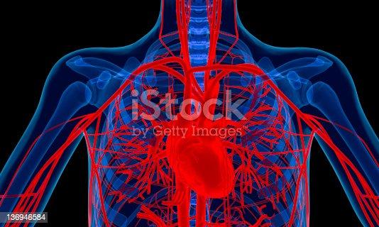 istock Human heart 136946584