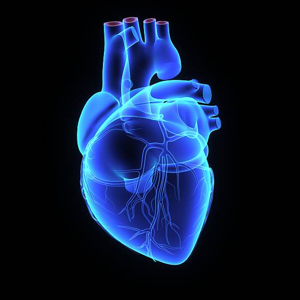 human heart - human heart stock photos and pictures
