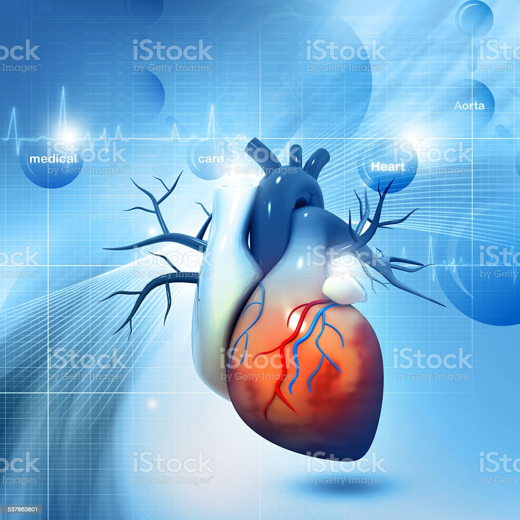 Human heart stock photo