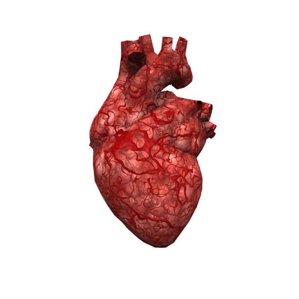 Human Heart - foto stock
