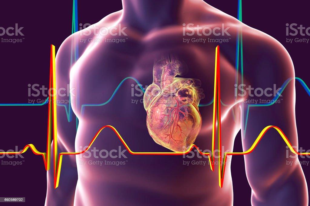 Menschliches Herz Mit Herz Booten - Stockfoto | iStock