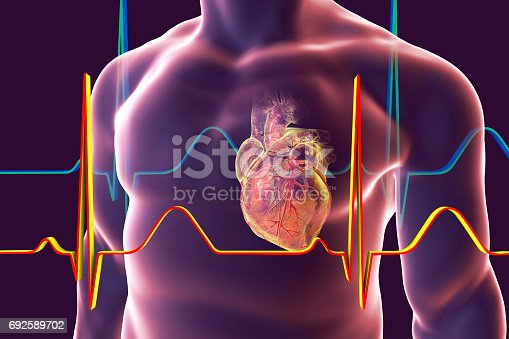 istock Human heart with heart vessles 692589702