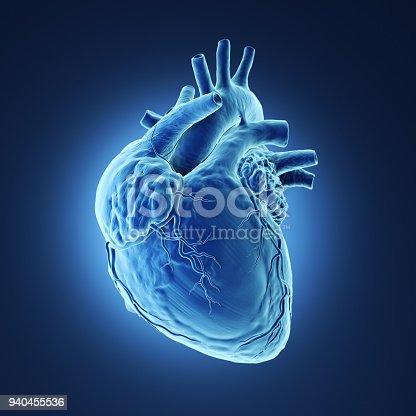 istock Human heart Xray. 940455536