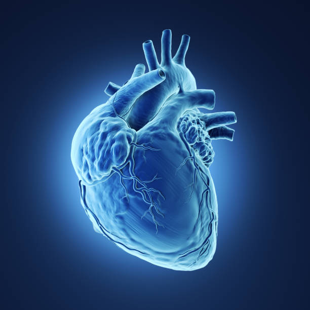 human heart xray. - human heart stock photos and pictures