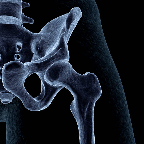 Human hip stock photo