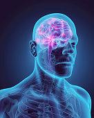 istock Human Internal Organic - Brain. 515480480
