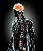 istock Human Internal Organic - Brain. 515480642