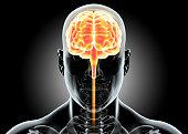 istock Human Internal Organic - Brain. 515480996