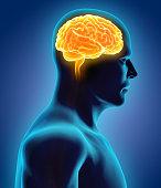 istock Human Internal Organic - Brain. 516721408