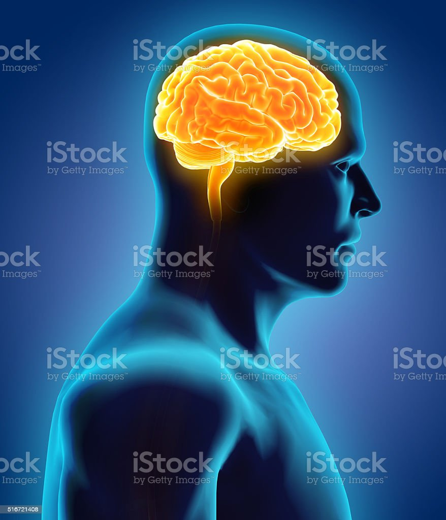 Human Internal Organic - Brain. stock photo