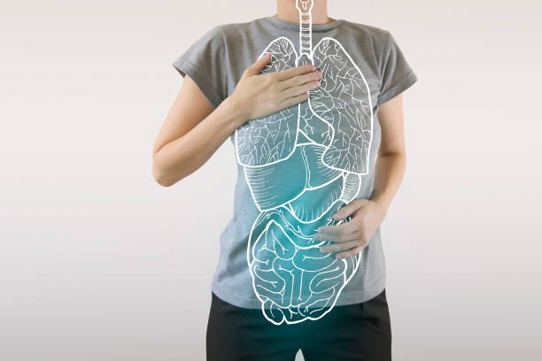 human internal organs drawing colored blue / health and good diet for body care - sistema immunitario foto e immagini stock