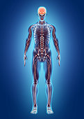 istock Human Internal System - Nervous system. 515321450