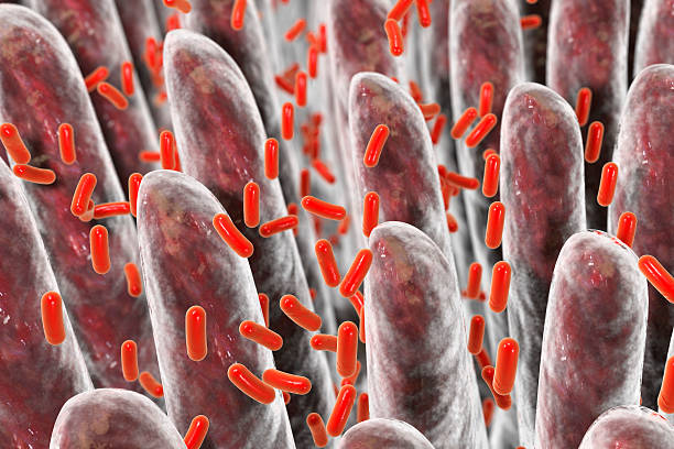 Human intestine with intestinal bacteria Human intestine with intestinal bacteria, 3D illustration bifidobacterium stock pictures, royalty-free photos & images