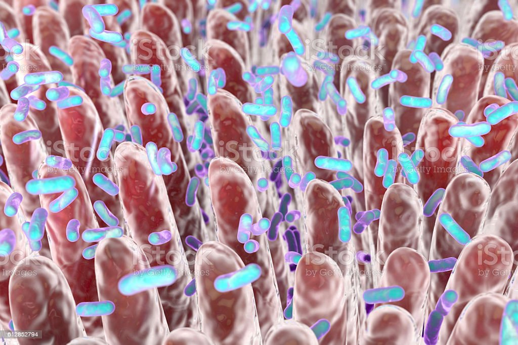 Human intestine with intestinal bacteria stock photo
