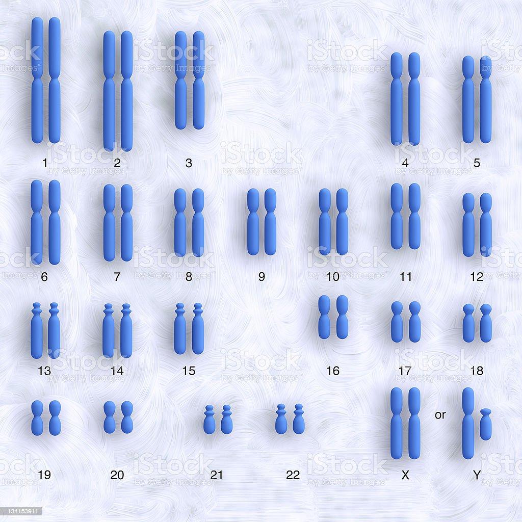 human karyotype stock photo