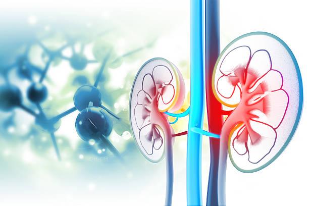 Image result for Reconstructive urology