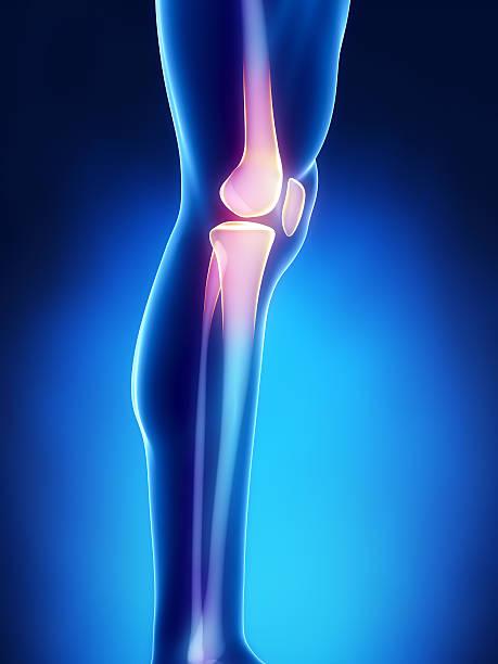 Human knee anatomy with femur, tibia and fibula bones stock photo